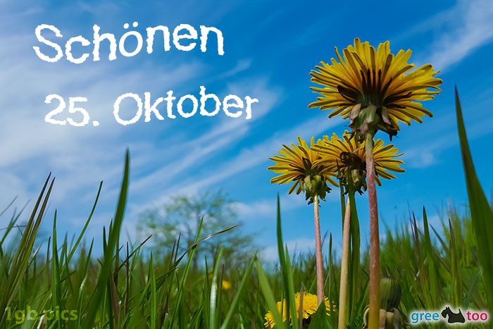 Loewenzahn Himmel Schoenen 25 Oktober Bild - 1gb.pics