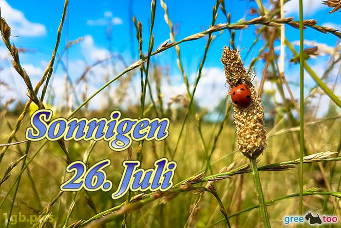 Marienkaefer Sonnigen 26 Juli Bild - 1gb.pics