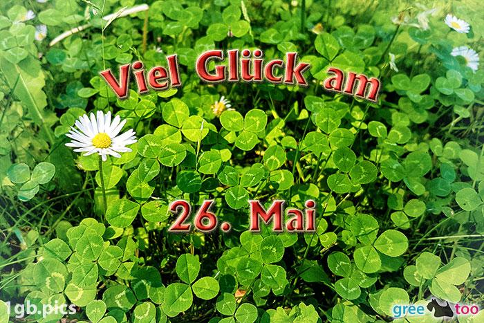 Klee Gaensebluemchen Viel Glueck Am 26 Mai Bild - 1gb.pics