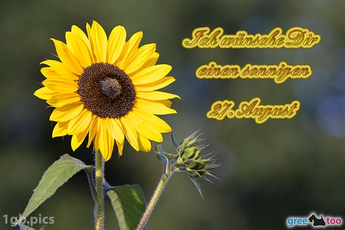 Sonnenblume Einen Sonnigen 27 August Bild - 1gb.pics