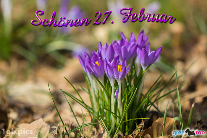 Krokusstaude Schoenen 27 Februar Bild - 1gb.pics