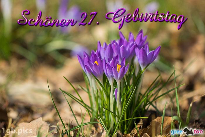 Krokusstaude Schoenen 27 Geburtstag Bild - 1gb.pics