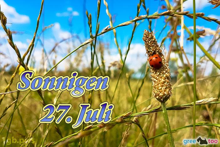 Marienkaefer Sonnigen 27 Juli Bild - 1gb.pics