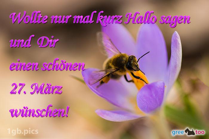 Krokus Biene Einen Schoenen 27 Maerz Bild - 1gb.pics