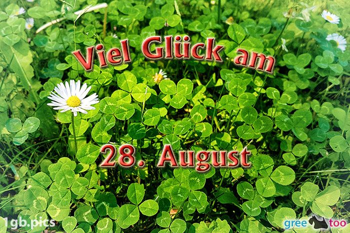 Klee Gaensebluemchen Viel Glueck Am 28 August Bild - 1gb.pics