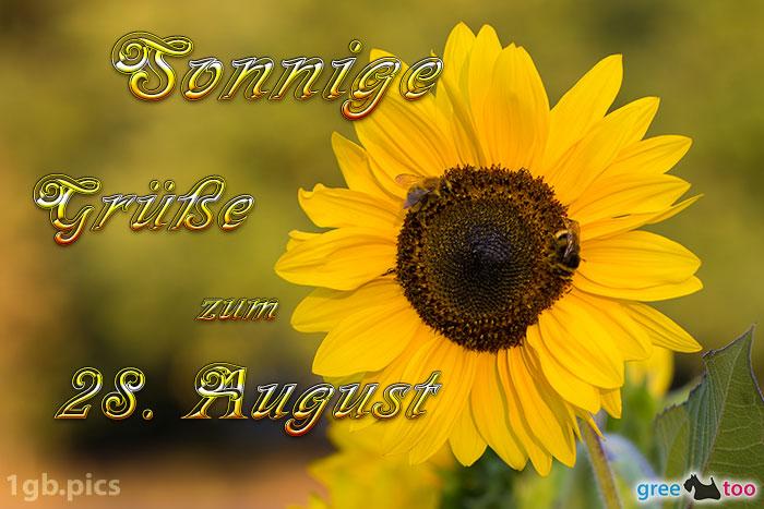 Sonnenblume Bienen Zum 28 August Bild - 1gb.pics