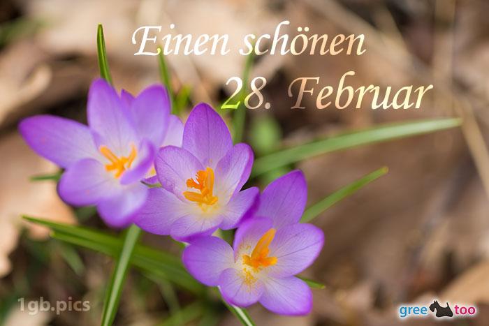 Lila Krokus Einen Schoenen 28 Februar Bild - 1gb.pics