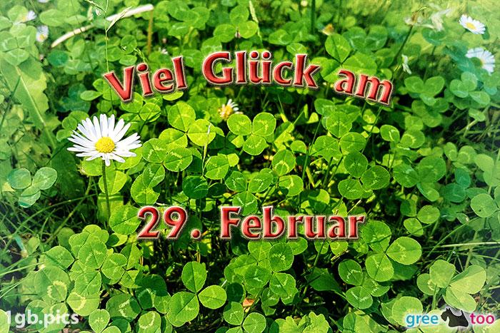 Klee Gaensebluemchen Viel Glueck Am 29 Februar Bild - 1gb.pics
