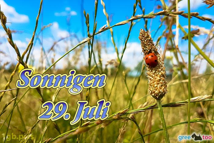 Marienkaefer Sonnigen 29 Juli Bild - 1gb.pics
