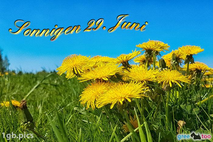 Loewenzahn Sonnigen 29 Juni Bild - 1gb.pics