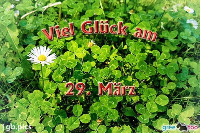 Klee Gaensebluemchen Viel Glueck Am 29 Maerz Bild - 1gb.pics