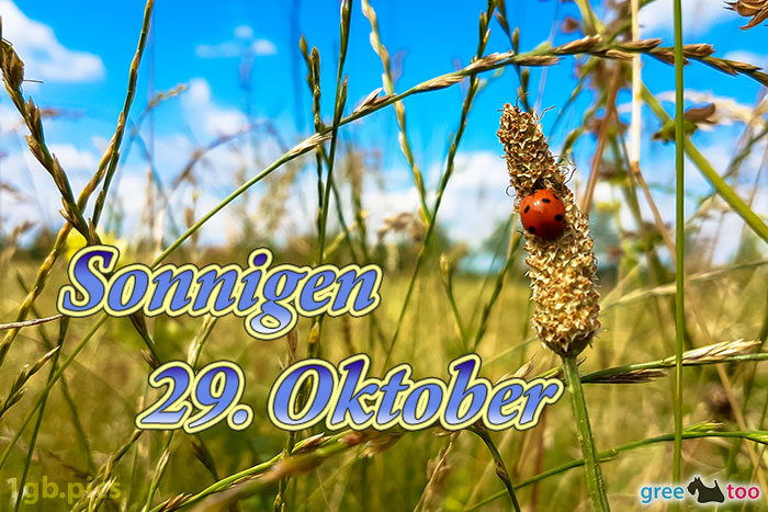 Marienkaefer Sonnigen 29 Oktober Bild - 1gb.pics