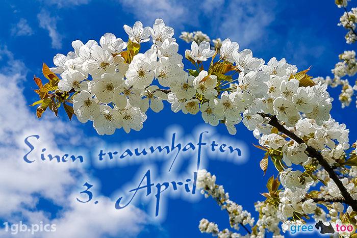 Kirschblueten Einen Traumhaften 3 April Bild - 1gb.pics