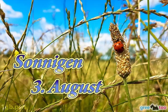Marienkaefer Sonnigen 3 August Bild - 1gb.pics