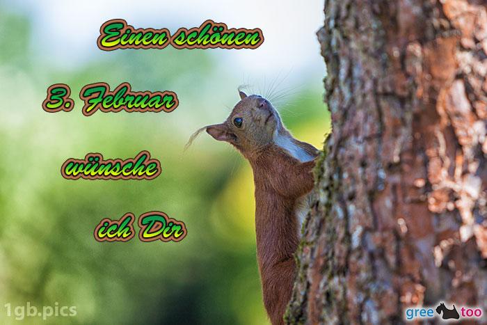 Eichhoernchen Einen Schoenen 3 Februar Bild - 1gb.pics
