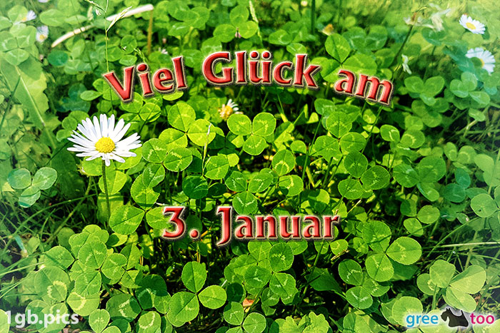 Klee Gaensebluemchen Viel Glueck Am 3 Januar Bild - 1gb.pics