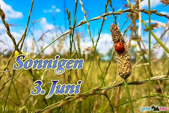 Marienkaefer Sonnigen 3 Juni Bild - 1gb.pics