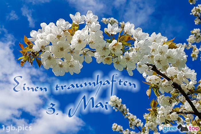 Kirschblueten Einen Traumhaften 3 Mai Bild - 1gb.pics