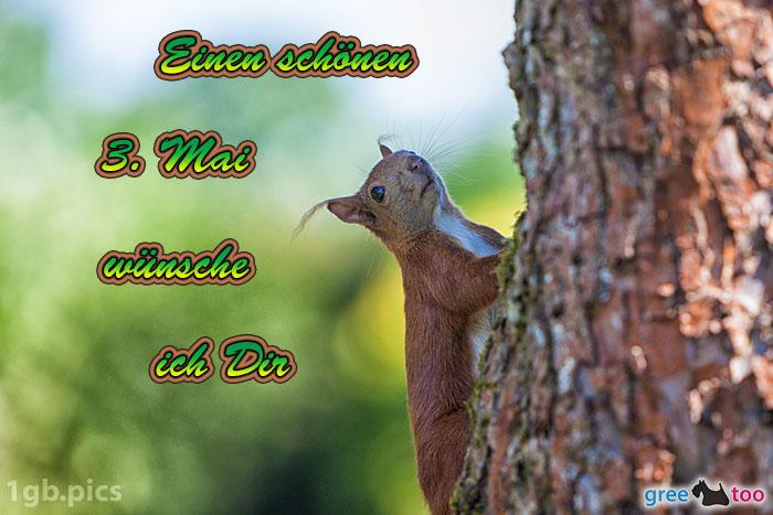 Eichhoernchen Einen Schoenen 3 Mai Bild - 1gb.pics