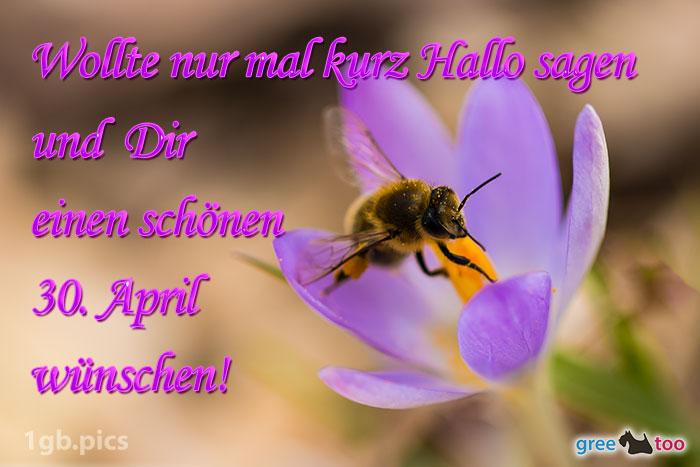 Krokus Biene Einen Schoenen 30 April Bild - 1gb.pics