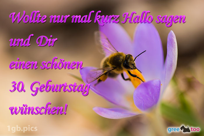 Krokus Biene Einen Schoenen 30 Geburtstag Bild - 1gb.pics