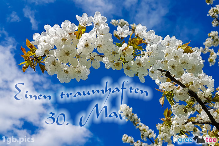 Kirschblueten Einen Traumhaften 30 Mai Bild - 1gb.pics