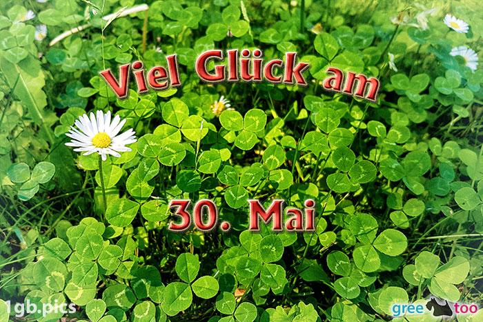 Klee Gaensebluemchen Viel Glueck Am 30 Mai Bild - 1gb.pics