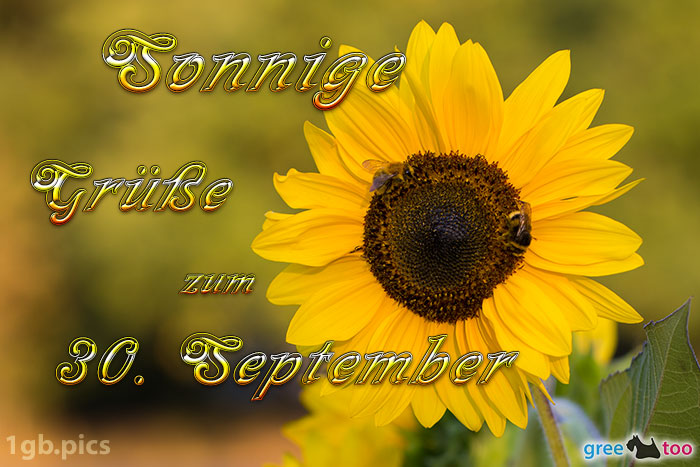 Sonnenblume Bienen Zum 30 September Bild - 1gb.pics