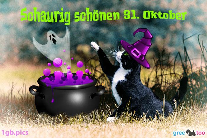 Katze Schaurig Schoenen 31 Oktober Bild - 1gb.pics