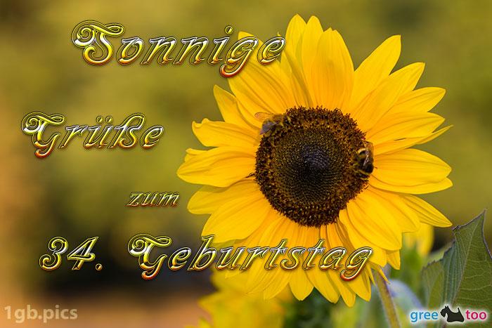 Sonnenblume Bienen Zum 34 Geburtstag Bild - 1gb.pics