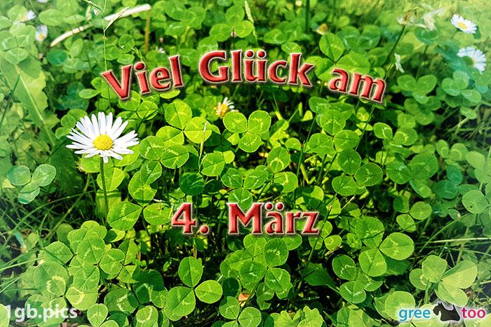 Klee Gaensebluemchen Viel Glueck Am 4 Maerz Bild - 1gb.pics