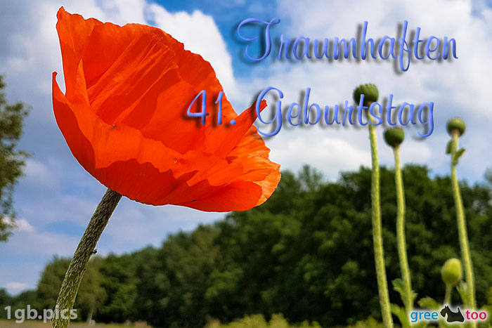 Mohnblume Traumhaften 41 Geburtstag Bild - 1gb.pics