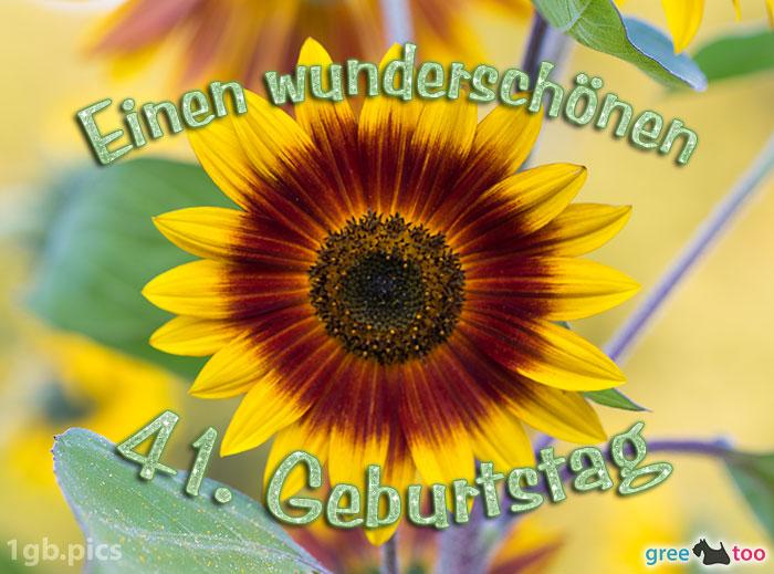 Sonnenblume Einen Wunderschoenen 41 Geburtstag Bild - 1gb.pics