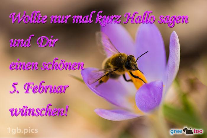 Krokus Biene Einen Schoenen 5 Februar Bild - 1gb.pics