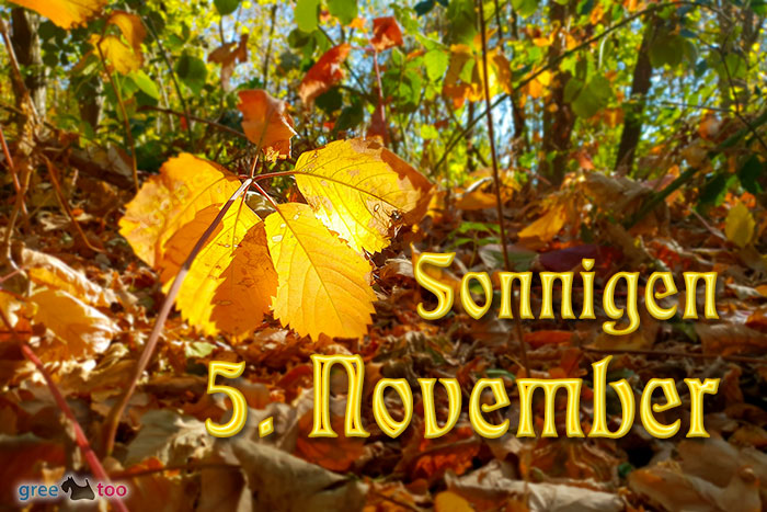Sonnigen 5 November Bild - 1gb.pics