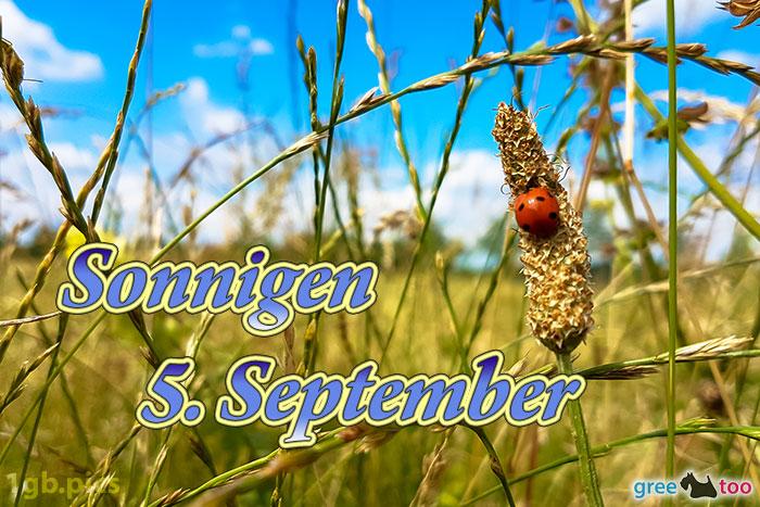 Marienkaefer Sonnigen 5 September Bild - 1gb.pics