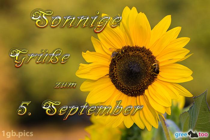 Sonnenblume Bienen Zum 5 September Bild - 1gb.pics
