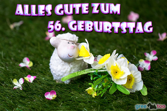 Alles Gute 56 Geburtstag Bild - 1gb.pics