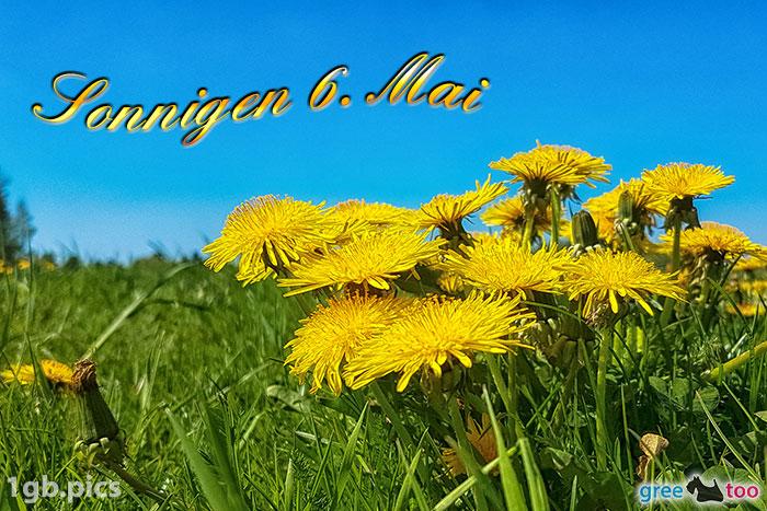 Loewenzahn Sonnigen 6 Mai Bild - 1gb.pics