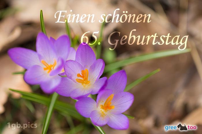 Lila Krokus Einen Schoenen 65 Geburtstag Bild - 1gb.pics