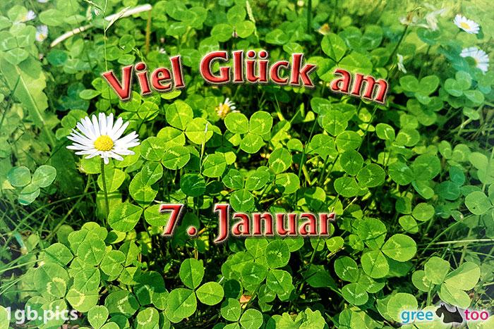 Klee Gaensebluemchen Viel Glueck Am 7 Januar Bild - 1gb.pics