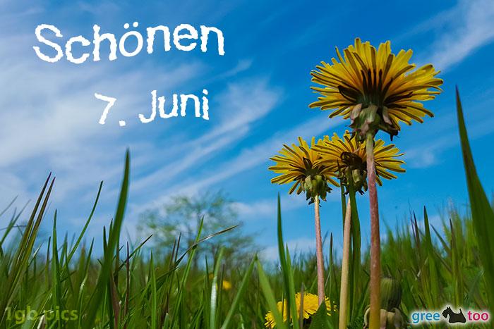 Loewenzahn Himmel Schoenen 7 Juni Bild - 1gb.pics