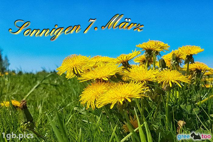 Loewenzahn Sonnigen 7 Maerz Bild - 1gb.pics