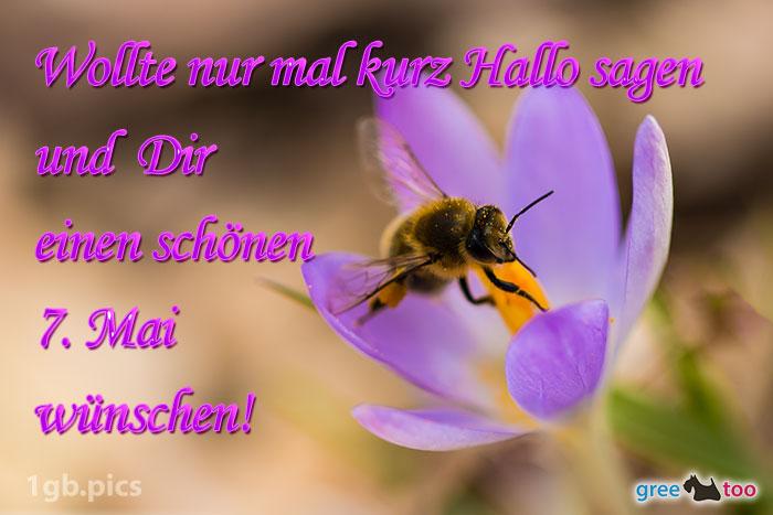 Krokus Biene Einen Schoenen 7 Mai Bild - 1gb.pics