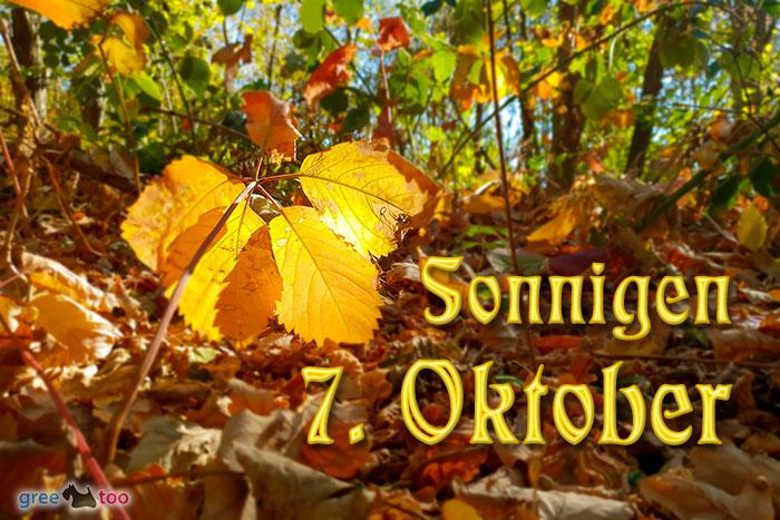 Sonnigen 7 Oktober Bild - 1gb.pics
