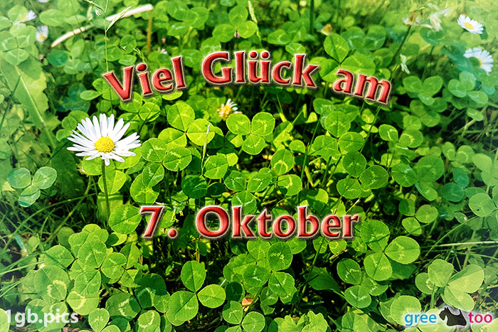 Klee Gaensebluemchen Viel Glueck Am 7 Oktober Bild - 1gb.pics
