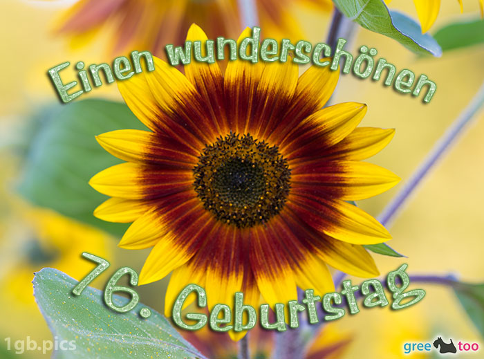 Sonnenblume Einen Wunderschoenen 76 Geburtstag Bild - 1gb.pics