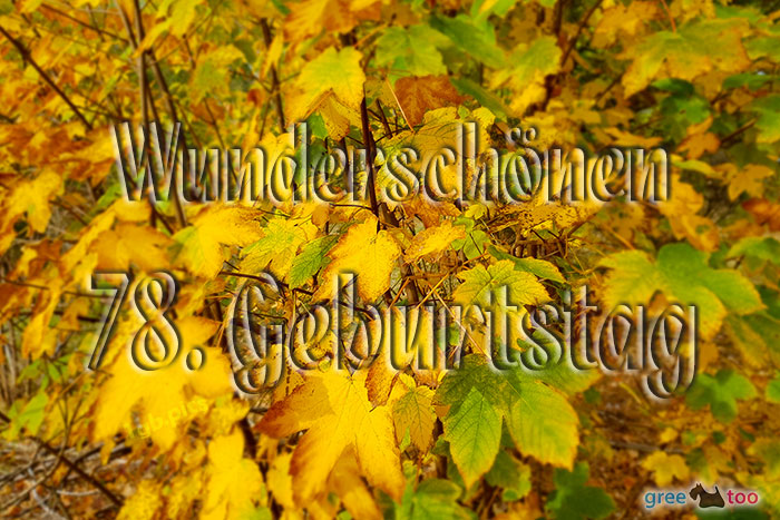 Wunderschoenen 78 Geburtstag Bild - 1gb.pics