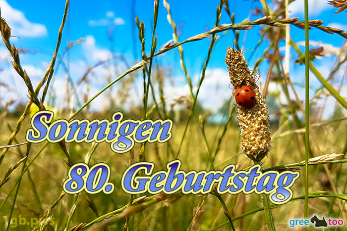 Marienkaefer Sonnigen 80 Geburtstag Bild - 1gb.pics