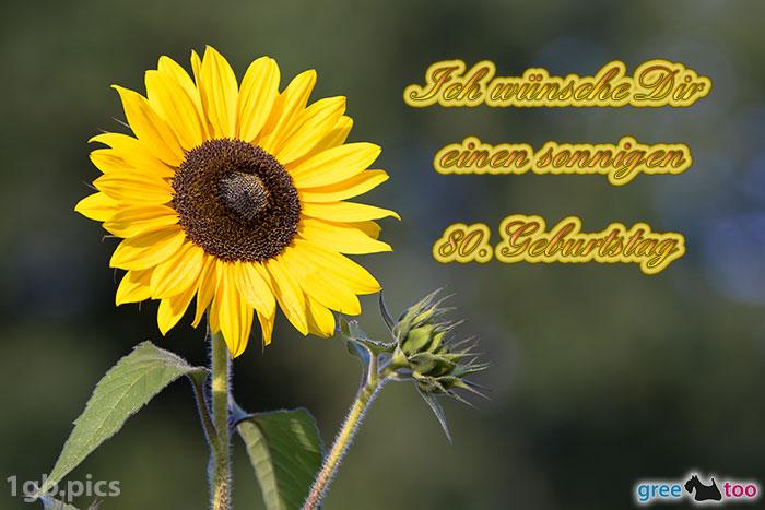 Sonnenblume Einen Sonnigen 80 Geburtstag Bild - 1gb.pics